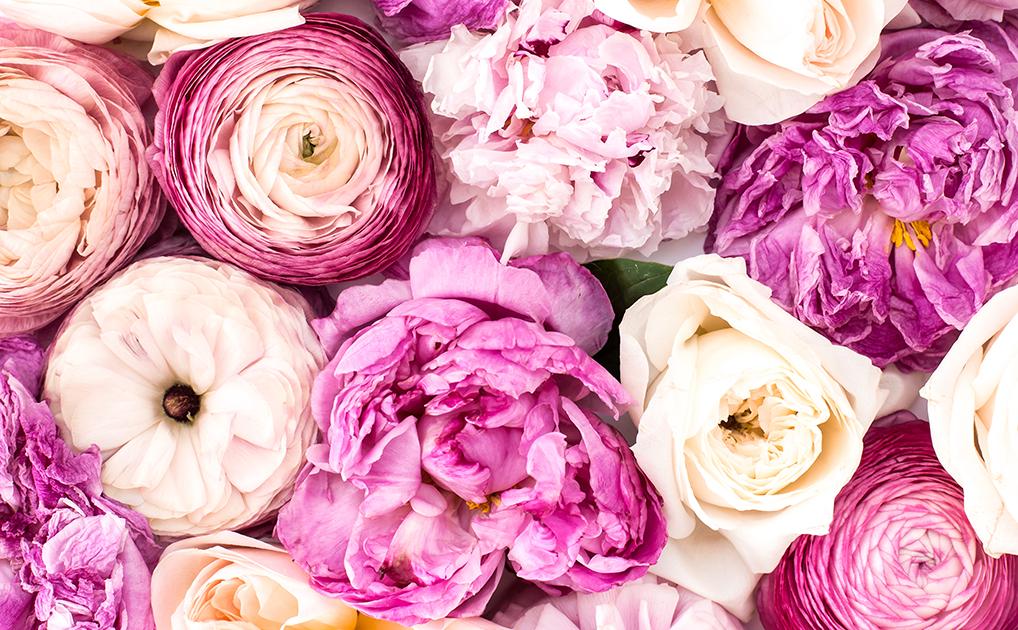 fragrance, toxins